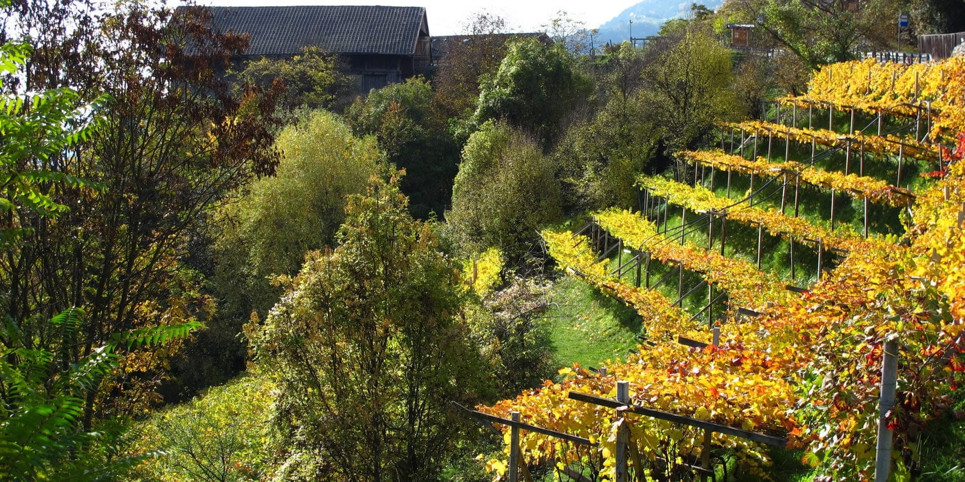 Unsere Weinberge in Barbian